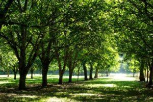 Tree Service Plant City