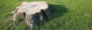 Tree Removal Brandon