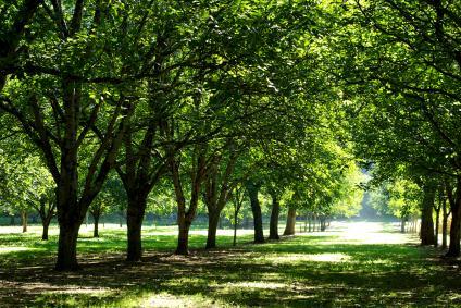Tree removal brandon Fl