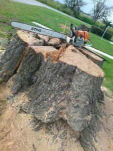 Tree removal in brandon fl